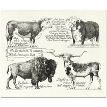 The Evolution Of Western North American Beef