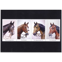 Stock Horse Series